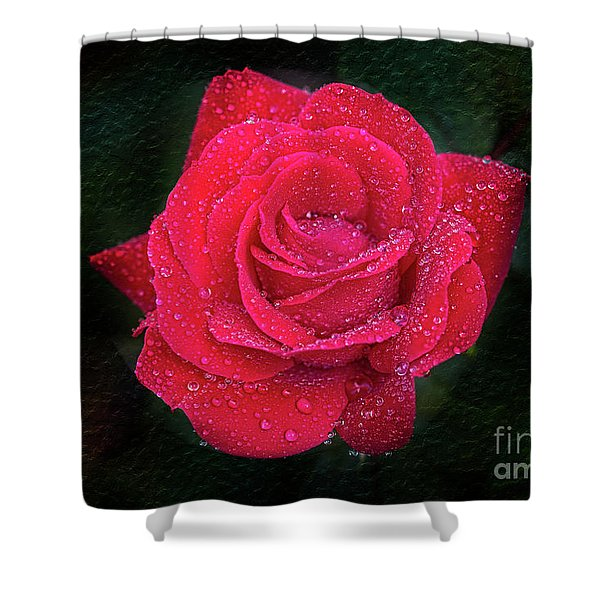 Morning Mist On Red Rose Shower Curtain