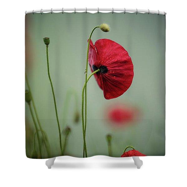 Morning Poppy Flower Shower Curtain
