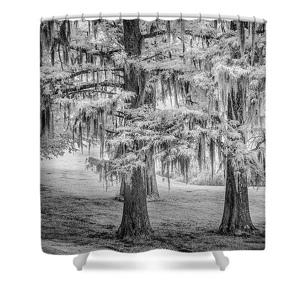 Moss Laden Trees 4132 Shower Curtain