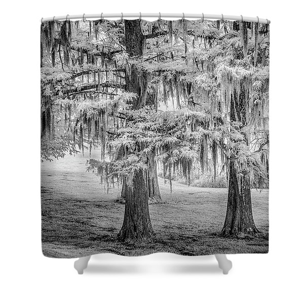Moss Laden Trees 4132 Shower Curtain