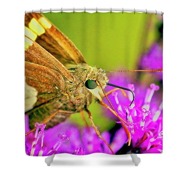 Moth On Purple Flower Shower Curtain