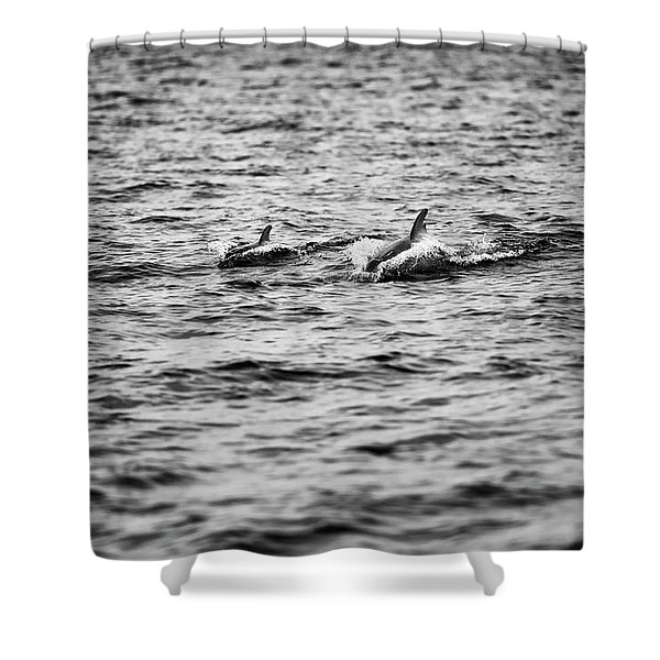 Mother Dolphin And Calf Swimming In Moreton Bay. Black And White Shower Curtain