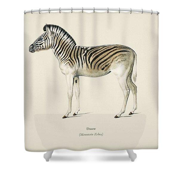Mountain Zebra  Dauw  Illustrated By Charles Dessalines D' Orbigny  1806-1876 2 Shower Curtain