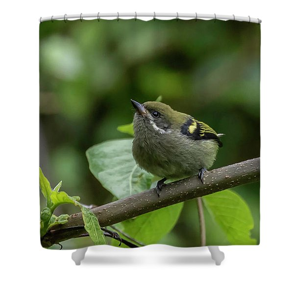 Moustached Tinkerbird Shower Curtain