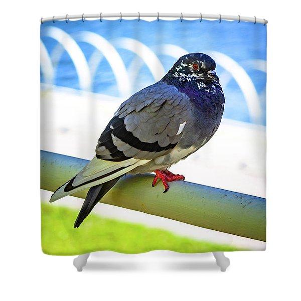 Mr. Pigeon Shower Curtain
