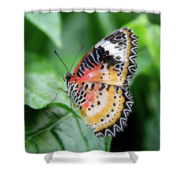 Multi Colored Butterfly Shower Curtain