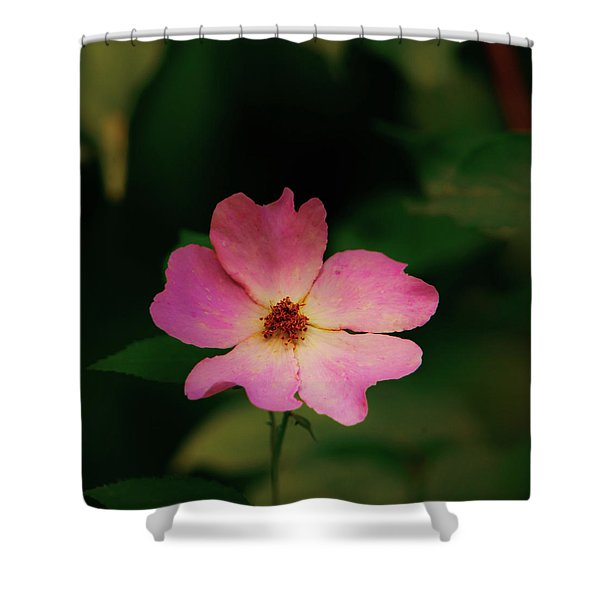 Multi Floral Rose Flower Shower Curtain