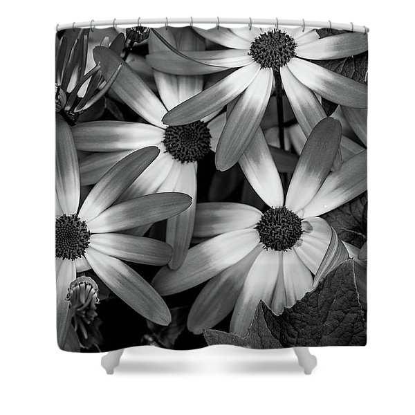 Multiple Daisies Flowers Shower Curtain