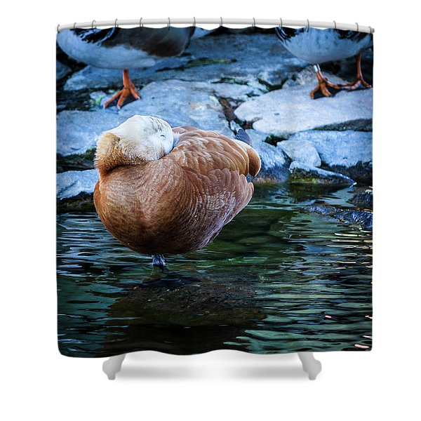 Napping At The Pond Shower Curtain