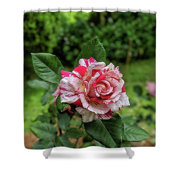 Neil Diamond Rose Shower Curtain