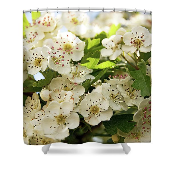 Neston.  Hawthorn Blossom. Shower Curtain