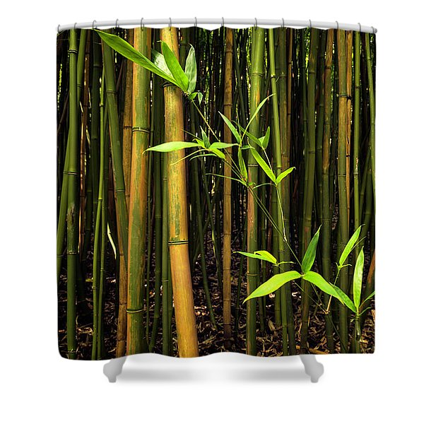 New Bamboo Shoot Shower Curtain