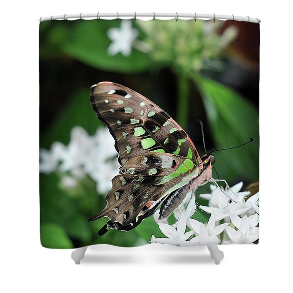 Shower Curtain featuring the photograph Nicely by Michelle Wermuth