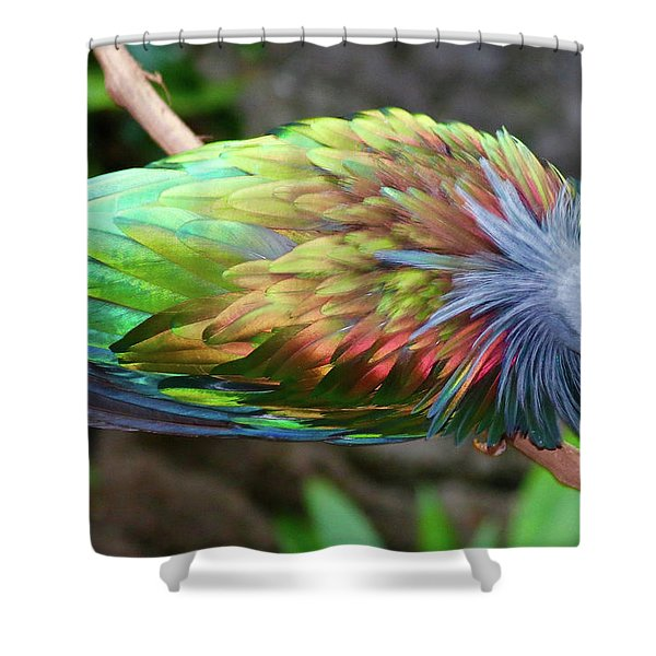 Nicobar Pigeon Shower Curtain