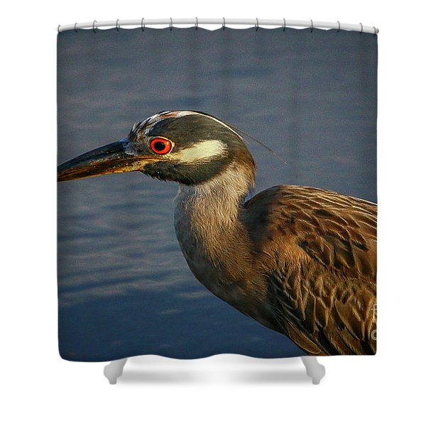 Shower Curtain featuring the photograph Night Heron Portrait by Tom Claud