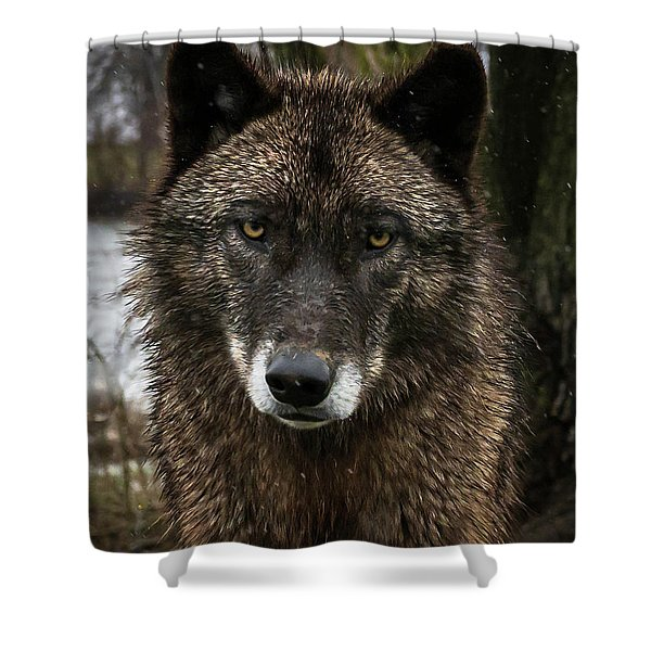 Niko Portrait Shower Curtain