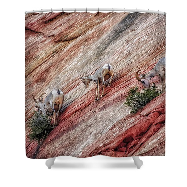 Nimble Mountain Goats 5694 Shower Curtain