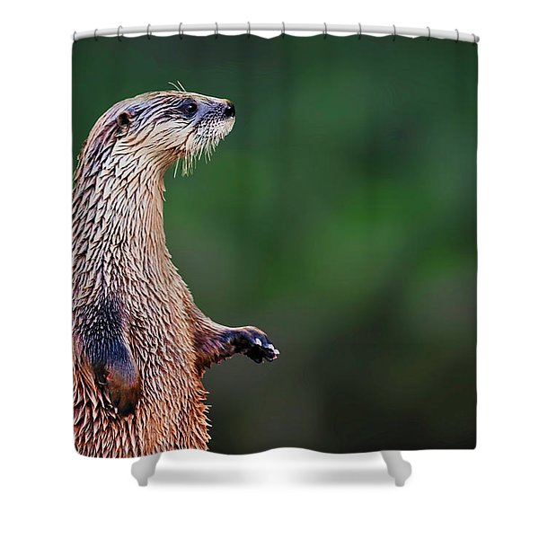 Norman The Otter Shower Curtain