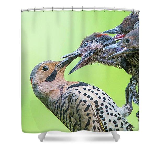 Northern Flicker At Nest Shower Curtain