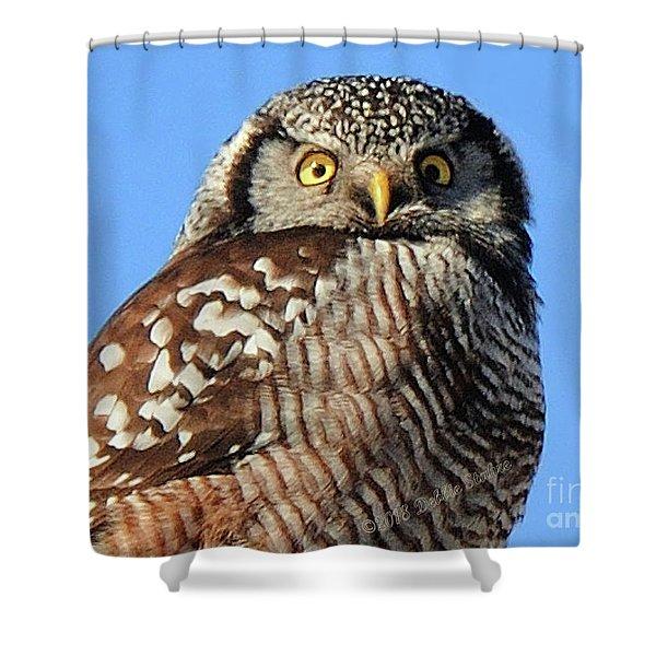 Northern Hawk-owl Shower Curtain