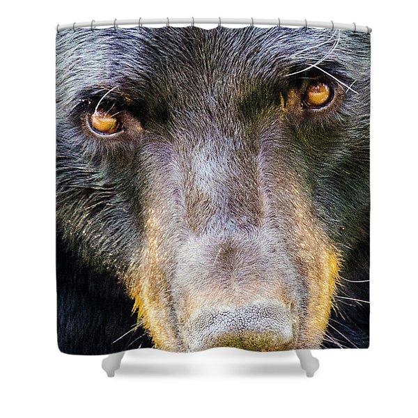 Nosy Bear Shower Curtain