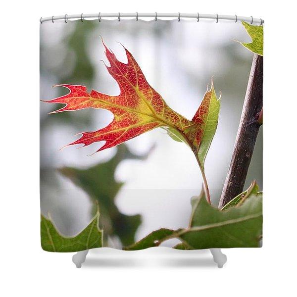 Oak Leaf Turning Shower Curtain