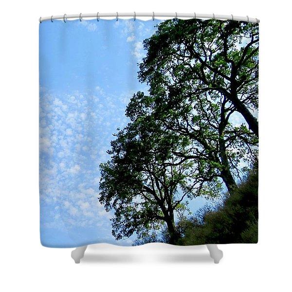 Oaks And Sky Shower Curtain