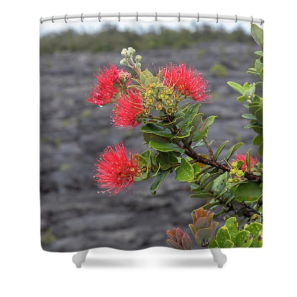 Ohia Blossoms Shower Curtain