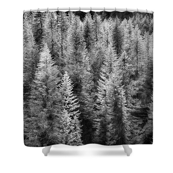 One Of Many Alp Trees Shower Curtain