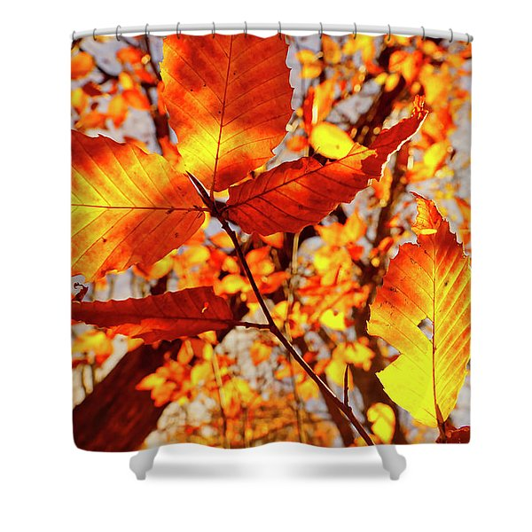 Shower Curtain featuring the photograph Orange Fall Leaves by Meta Gatschenberger