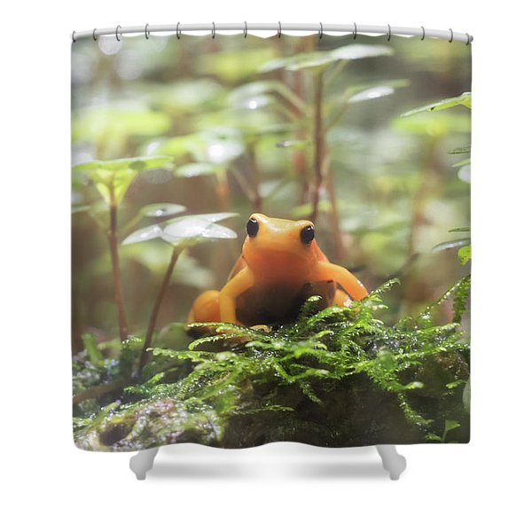Shower Curtain featuring the photograph Orange Frog. by Anjo Ten Kate