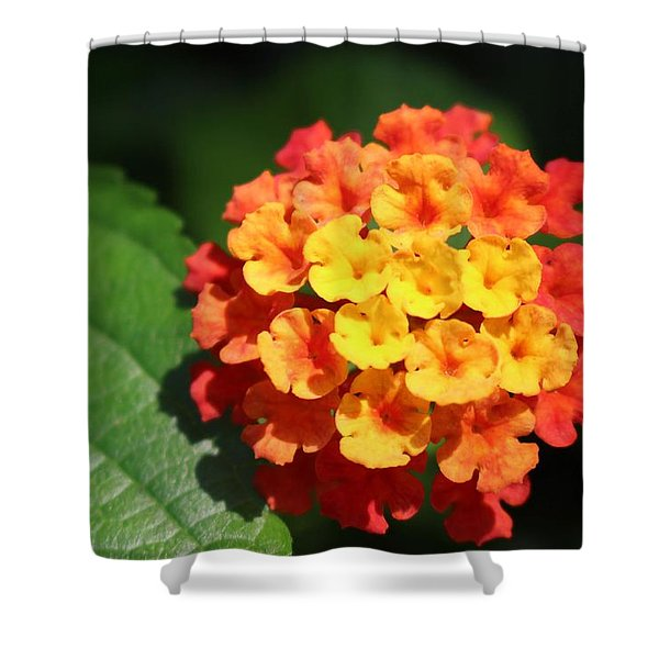Orange Lantana Shower Curtain