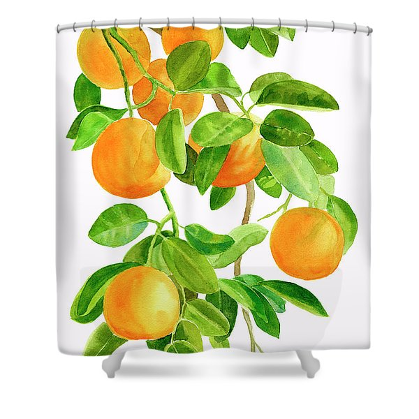 Oranges On A Branch Shower Curtain