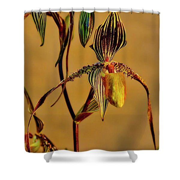Orchid Study Eight Shower Curtain