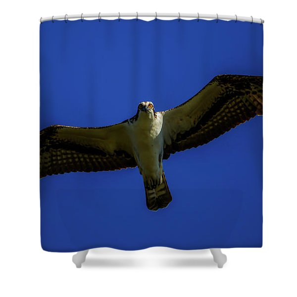 Osprey Glide In Blue Shower Curtain