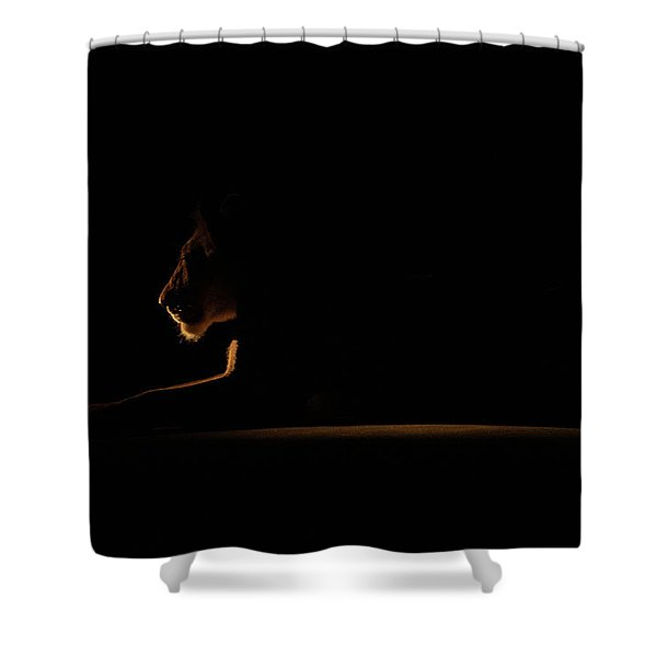 Outline African Lion Shower Curtain