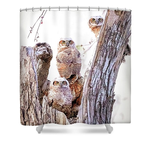 Owl Trio Standing Guard Shower Curtain