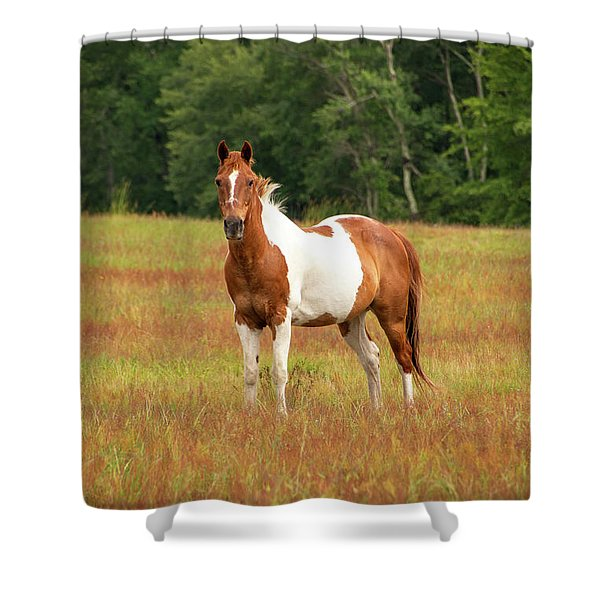 Paint Horse In Pasture Shower Curtain