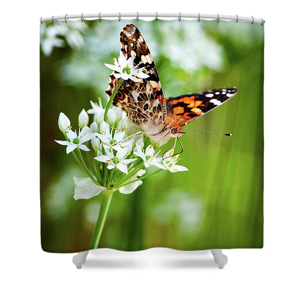 Painted Lady II Shower Curtain