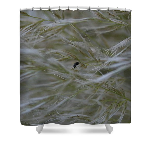 Pampas Grass And Insect Shower Curtain