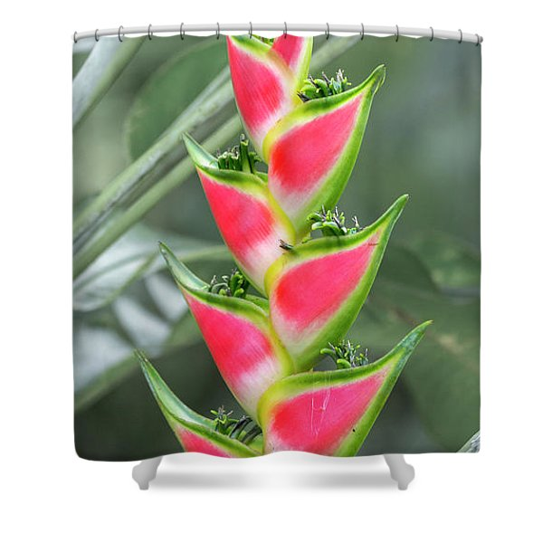 Peace And Beauty Heliconias Shower Curtain