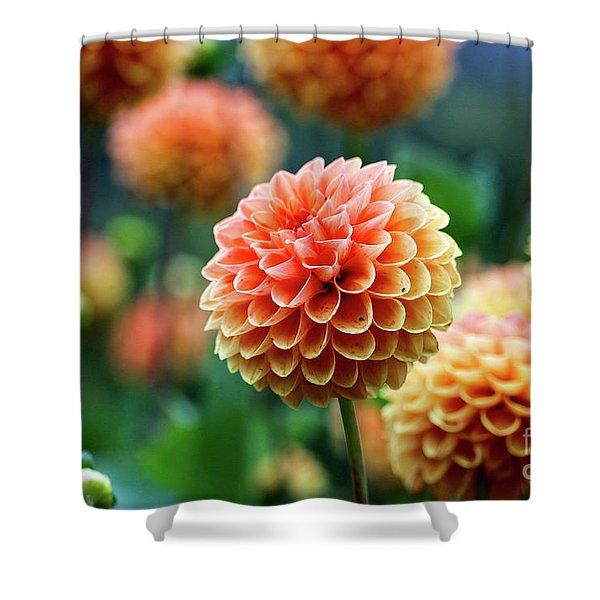 Peach Dahlias Shower Curtain