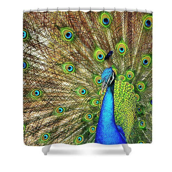 Shower Curtain featuring the photograph Peacock Colors by Charles McKelroy