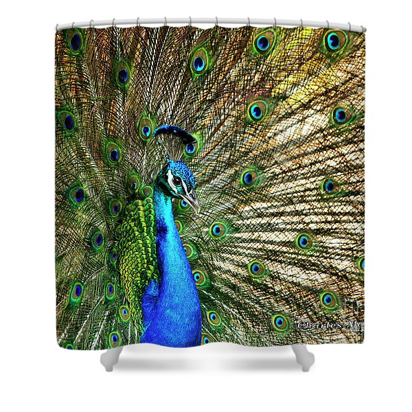 Shower Curtain featuring the photograph Peacock Full Bloom by Charles McKelroy