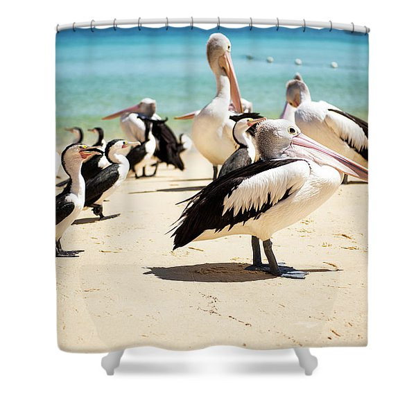 Shower Curtain featuring the photograph Pelicans During The Day by Rob D Imagery