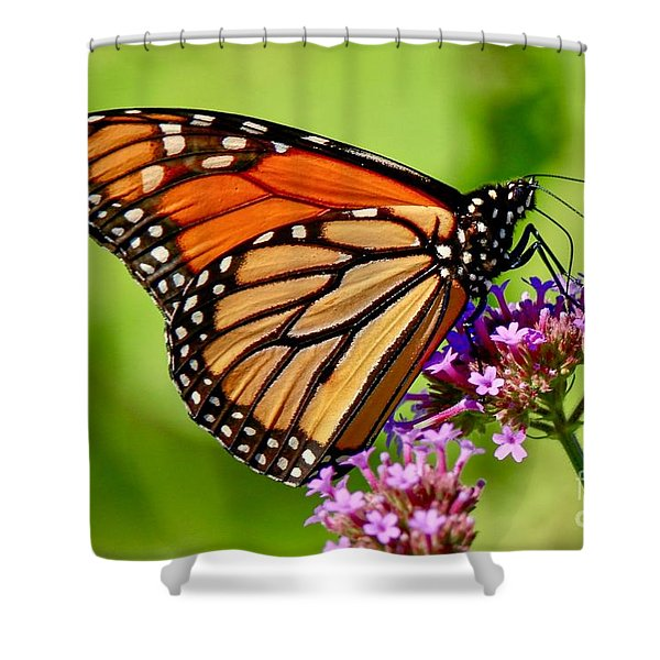 Perfect Monarch Shower Curtain