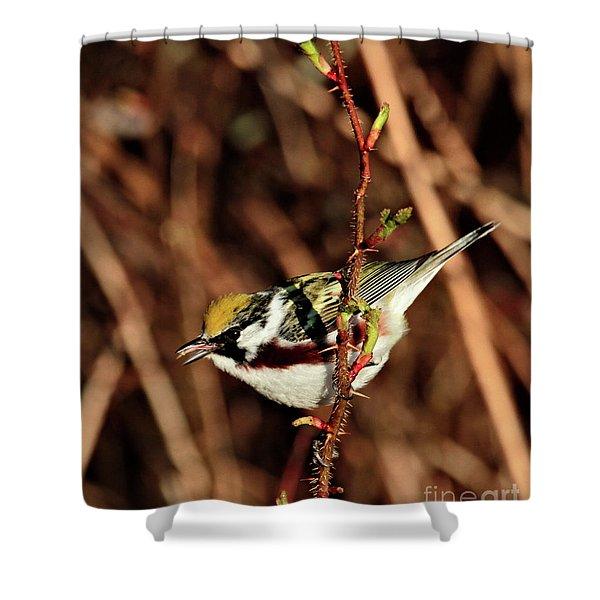 Perky Little Warbler Shower Curtain