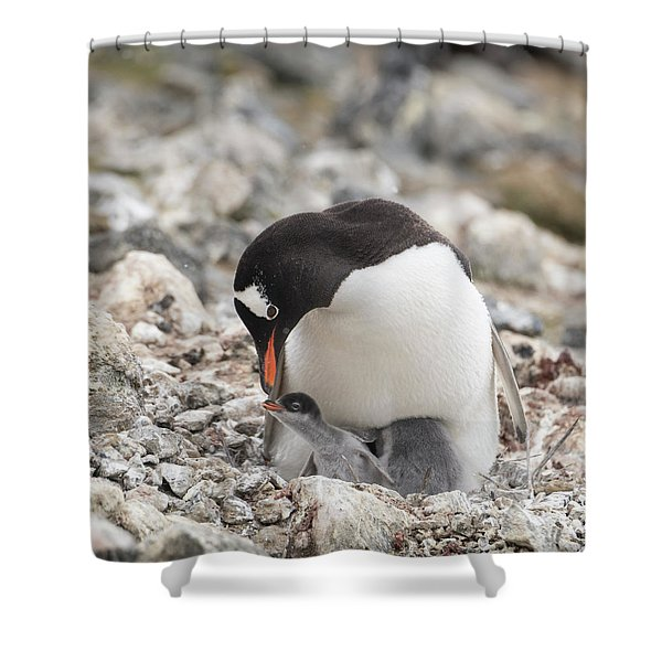Personality Emerges Early Shower Curtain