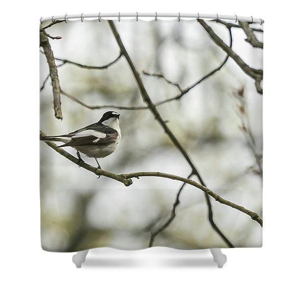 Pied Flycatcher Shower Curtain