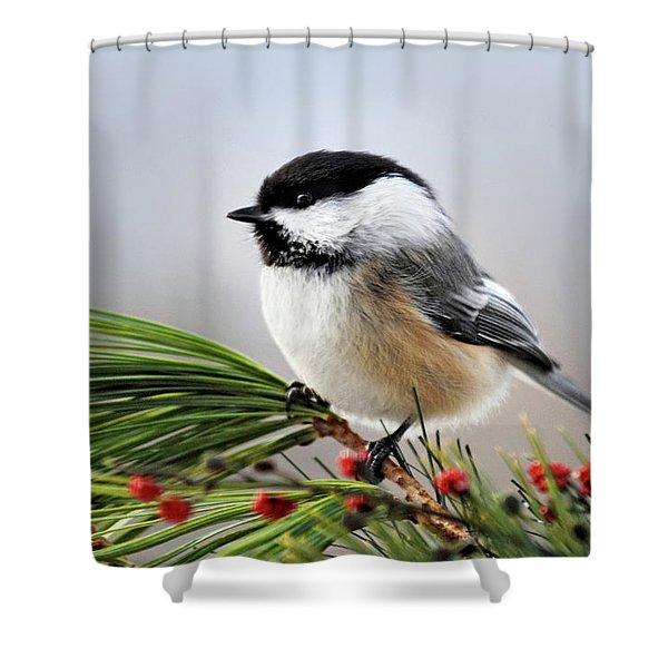 Pine Chickadee Shower Curtain